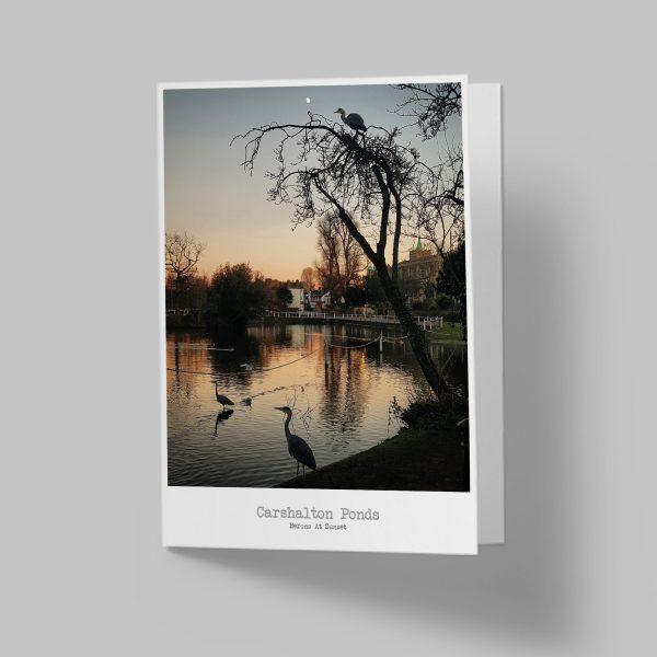 Herons at Sunset Carshalton Greeting Card