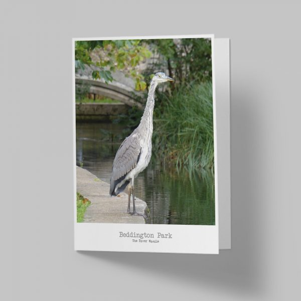 Beddington Heron Carshalton Greeting Card