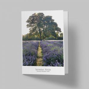 Carshalton Lavender Fields Greeting Card