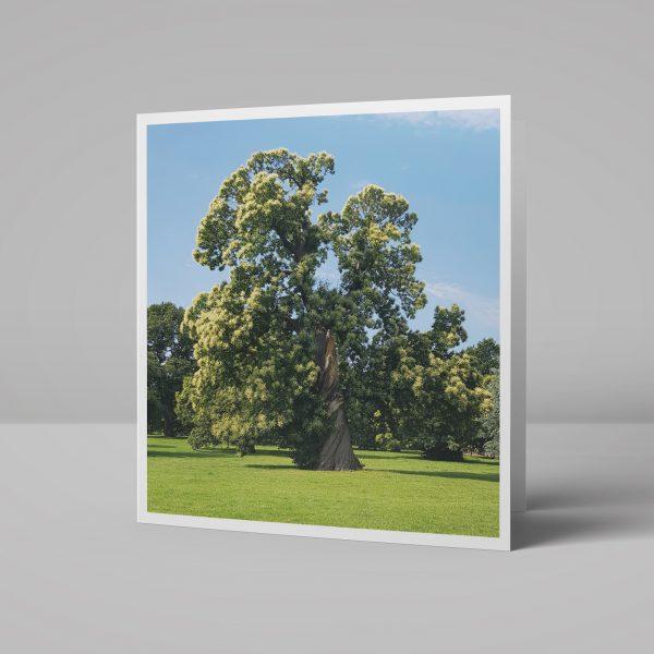 Carshalton Park Sweet Chestnut tree Carshalton Greeting Card