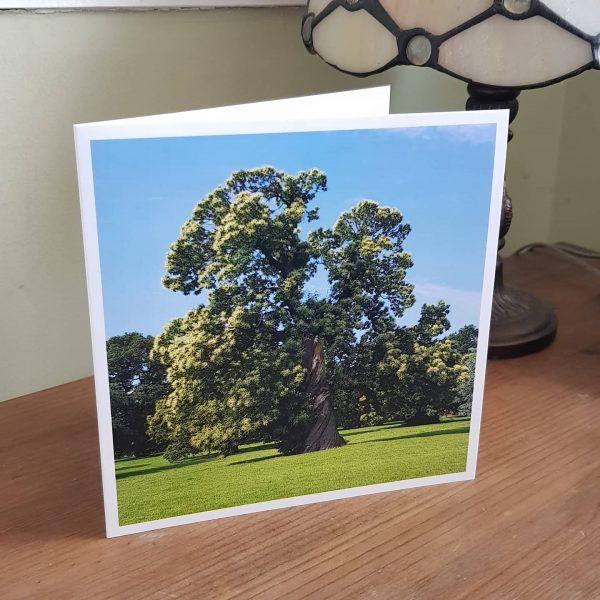 Sweet Chestnut Card