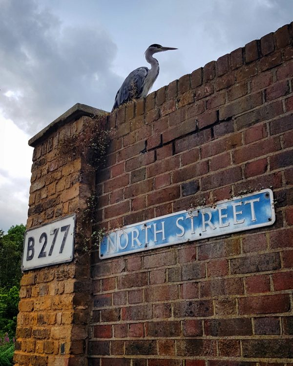 Heron on the wall